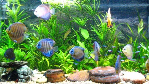 10 Most Unusual Aquarium Designs