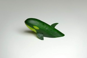 Cucumber Killer Whale