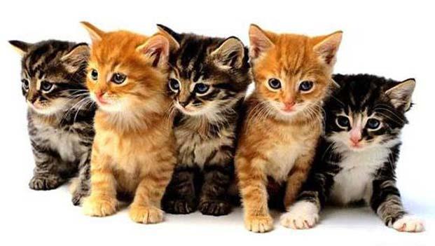 Cute-Kittens