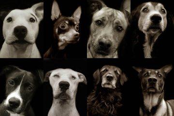 Dog-portraits