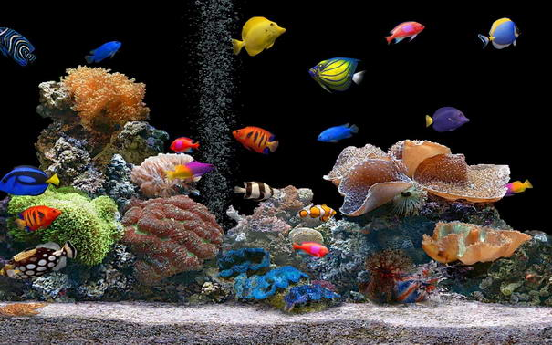 10 Most Important Tips You Should Know About Before Buying Fish
