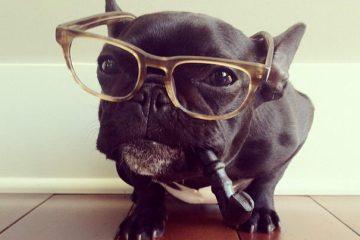 French bulldog By Sonya Yu (9)