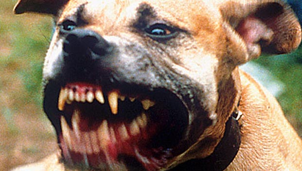 Most-Aggressive-Dogs