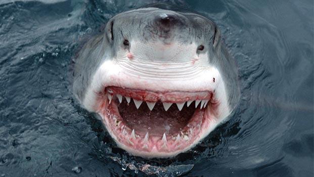 Most-Dangerous-Sea-Creatures