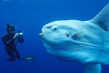 Sea-Creatures