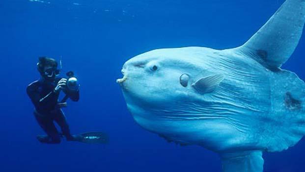 Ugly Sea Creatures Deep Sea Creatures