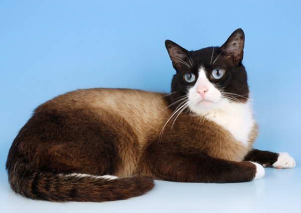 10 Jenis Baka Kucing Terbaik dan Tercomel. Ada Yang Anda Tak Pernah Nampak