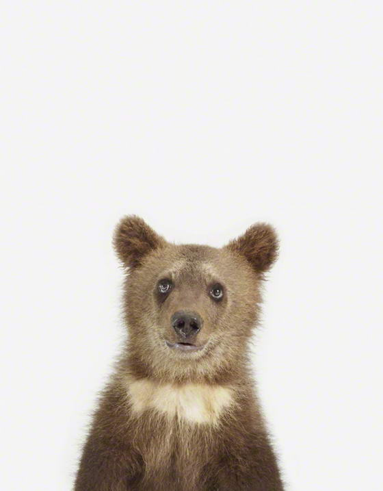 Baby Bear Baby Animal Photos