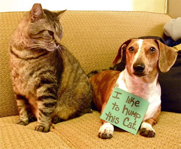 Cat Lover Dog