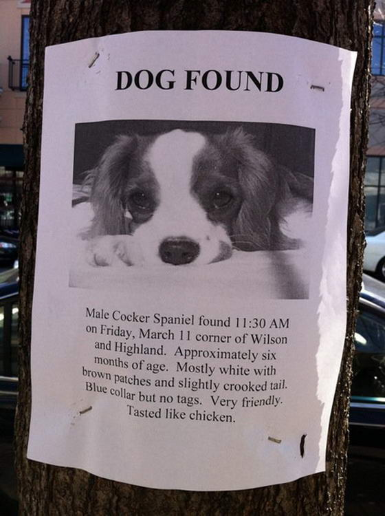Dog Found Street Flyers