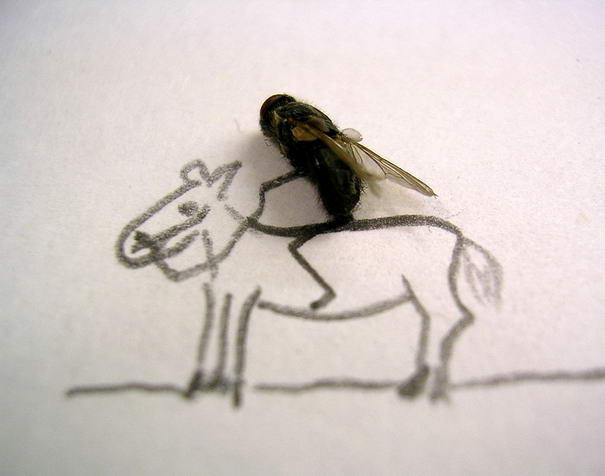 The Horse Creative Photos