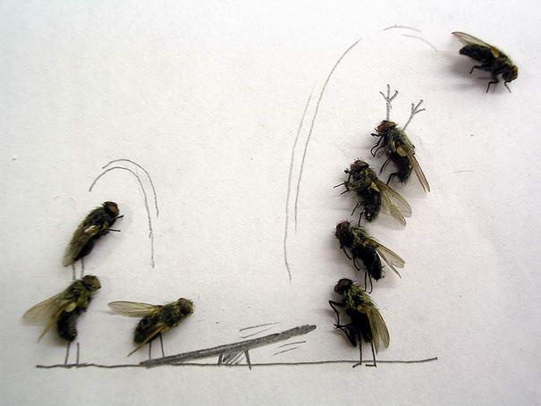 Porque Mi Baño Huele Feo:Art with Dead Flies