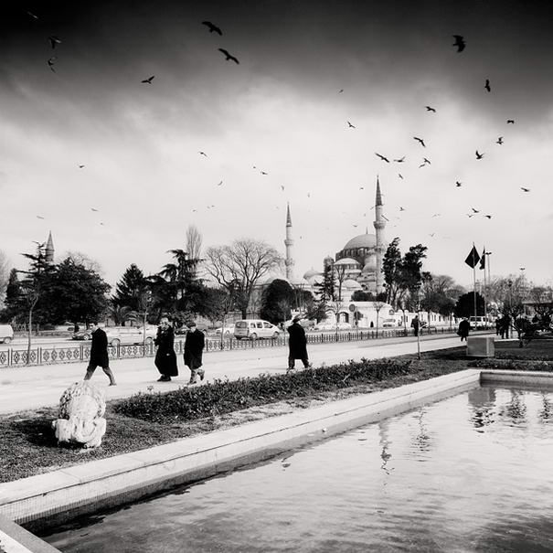 Birds and Mosque, Istanbul Impressive Photos