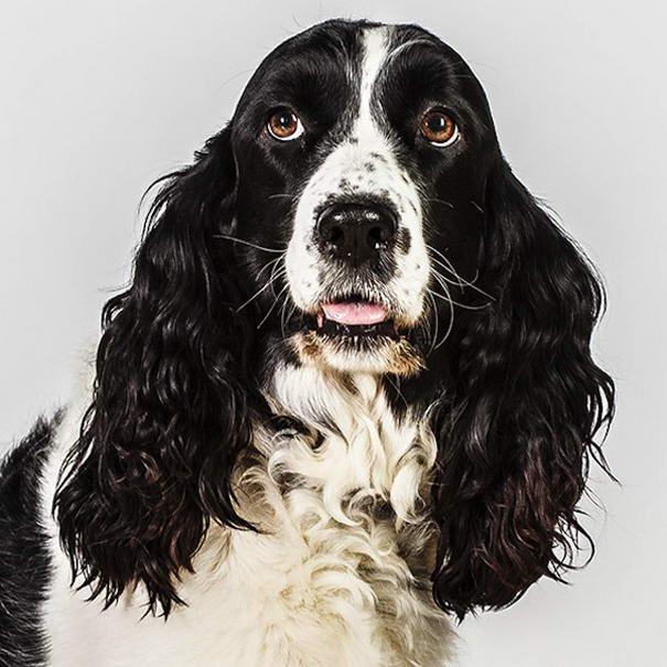 dog photos by barbara obrien-01