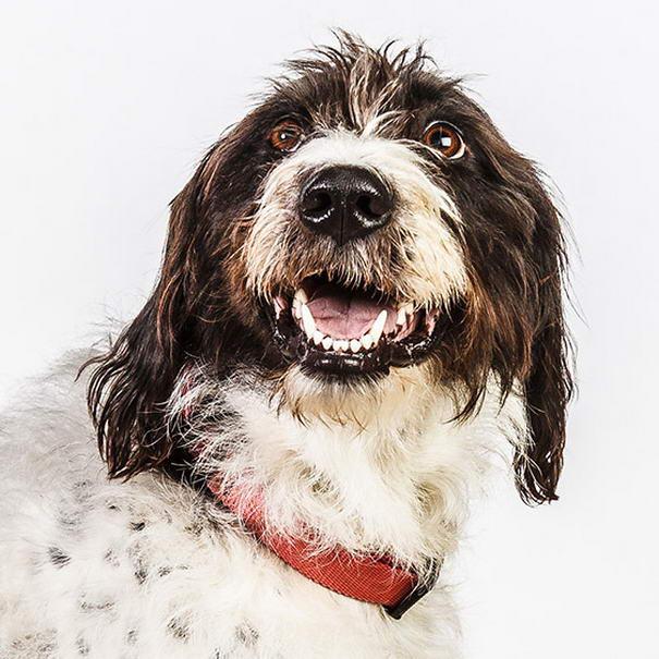 dog photos by barbara obrien-05