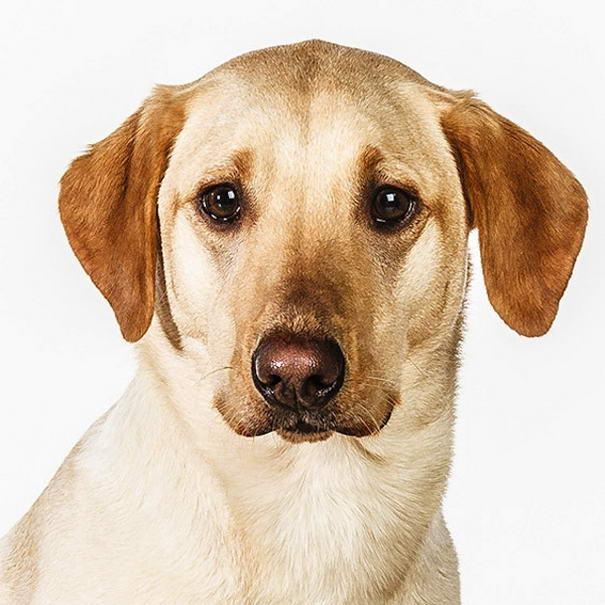 dog photos by barbara obrien-10