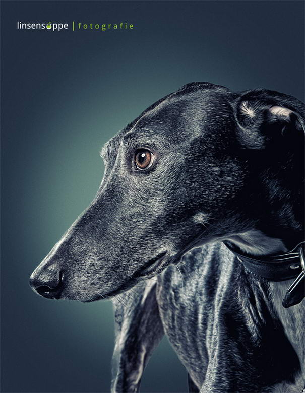 Dog Portraits By Daniel Sadlowski (7)