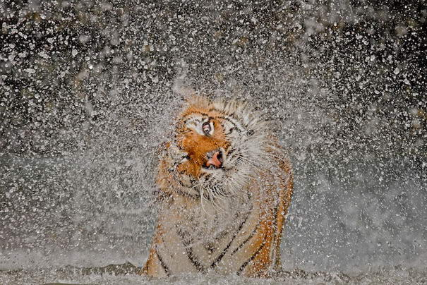 Photo and caption by Ashley Vincent