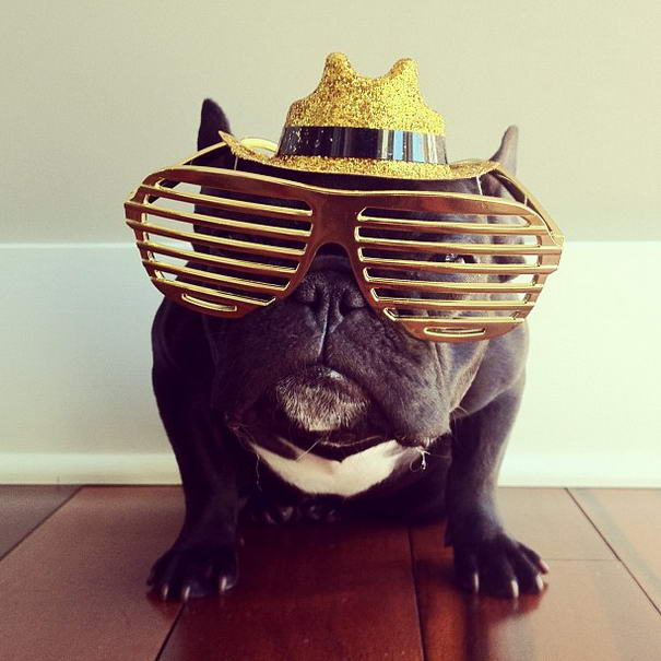 French Bulldog By Sonya Yu (1) Bulldog Photos