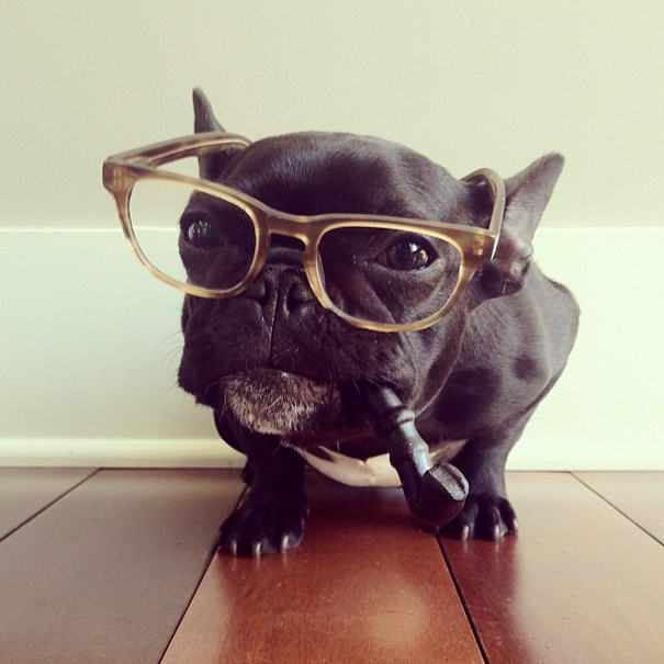 French Bulldog By Sonya Yu (2)