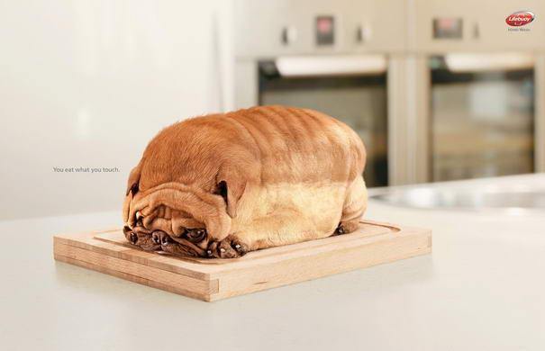 Dog Toast