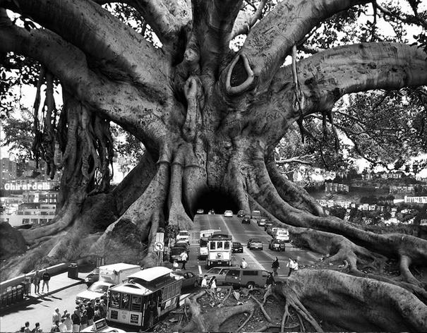Copyrights © Thomas Barbèy LLC (6)