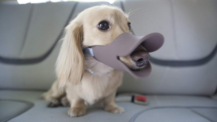 Duckbill Shaped Dog Muzzle