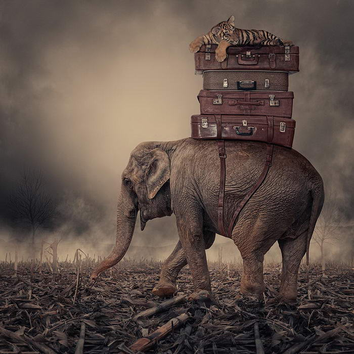 By Caras Ionut © (2)