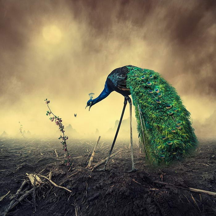 By Caras Ionut © (6)