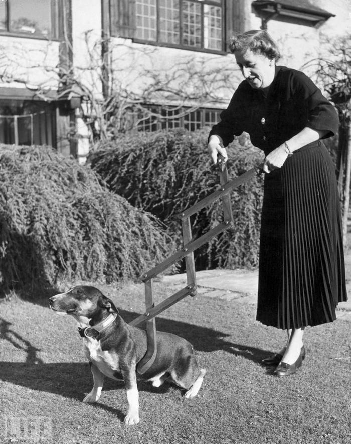 Dog Restrainer