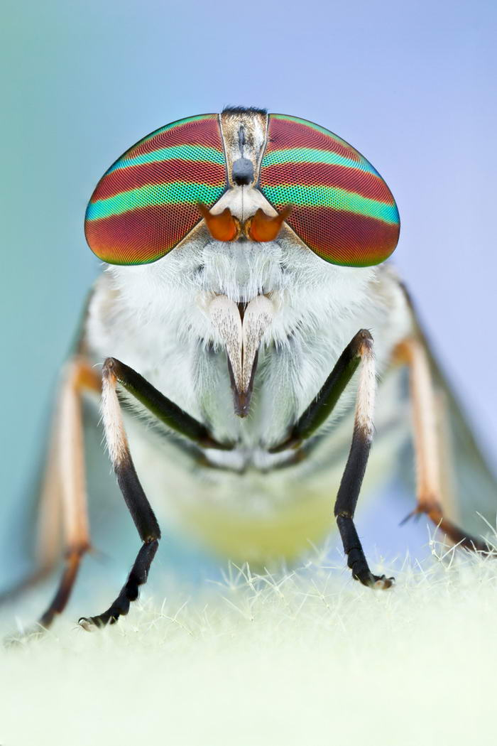 Unreal Macro Photos Of Insect Faces Horsefly