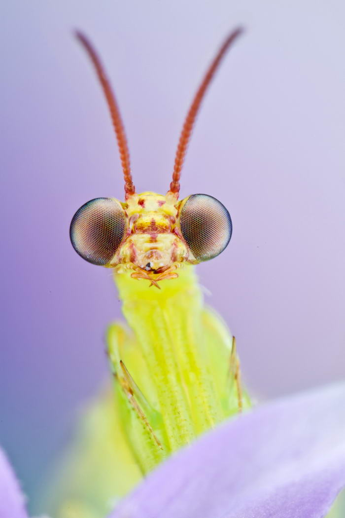 Unreal Macro Photos Of Insect Faces Mantis-Fly