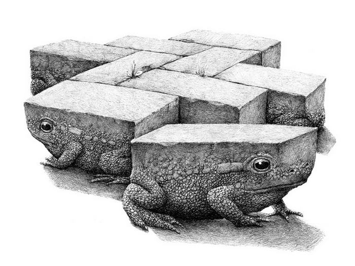 Tegelpadden