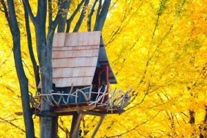 Tree House Surrounded by Yellow