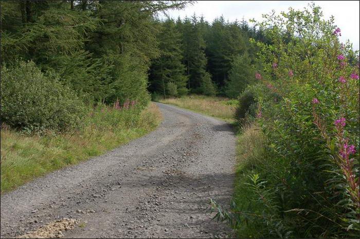 Ballyboley Forest
