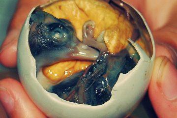 Balut