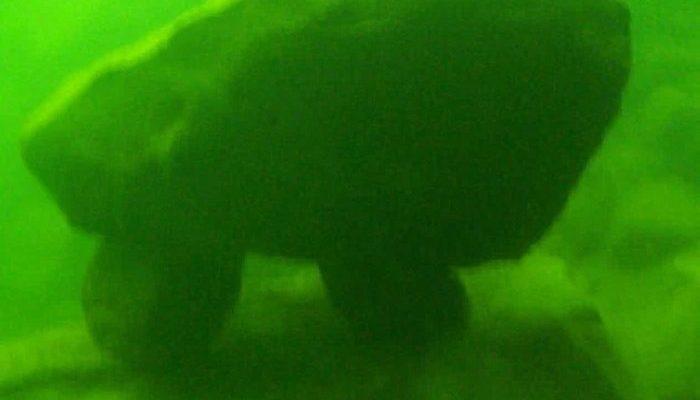 lake-macdonalds-underwater-structure