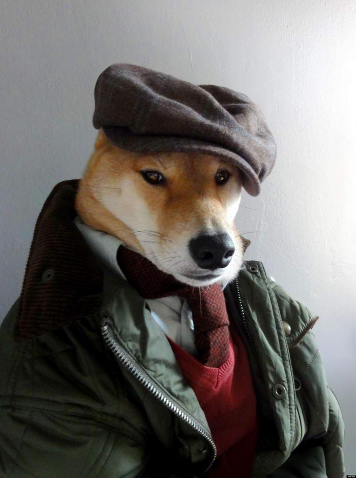 Stylish Menswear Dogs