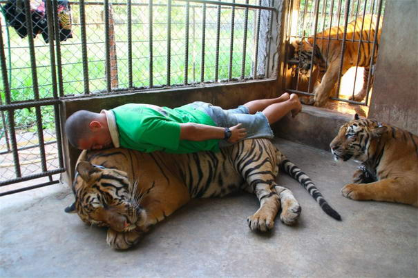 Planking On A Lion