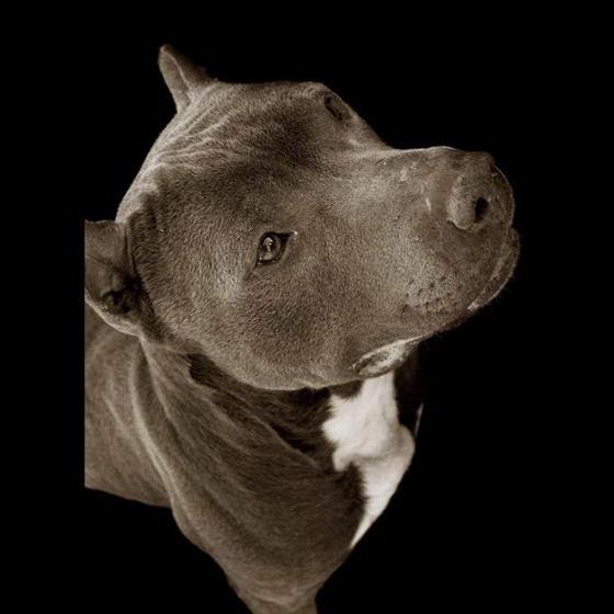 Shelter Dogs ByTraer Scott (10)