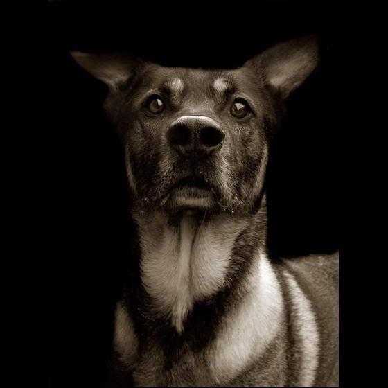 Shelter Dogs ByTraer Scott (3)