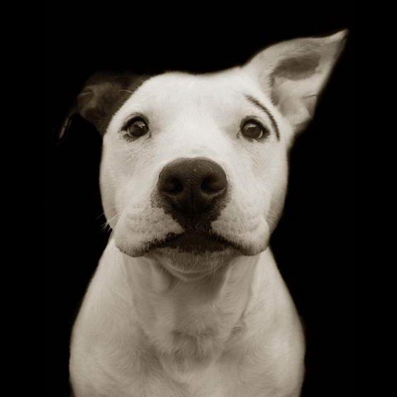 Shelter Dogs ByTraer Scott (4)