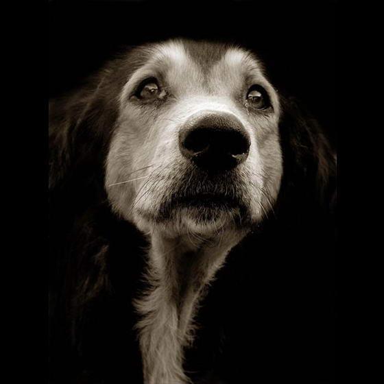 Shelter Dogs ByTraer Scott (5)