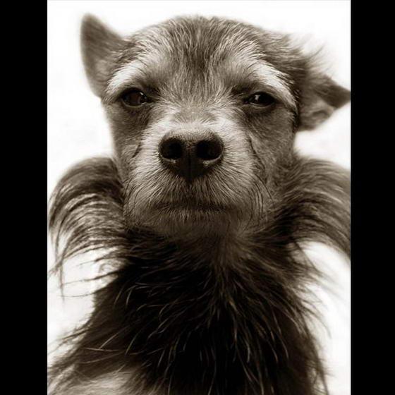 Shelter Dogs ByTraer Scott (6)