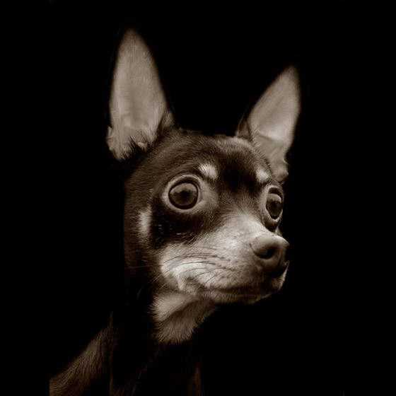 Shelter Dogs ByTraer Scott (7)