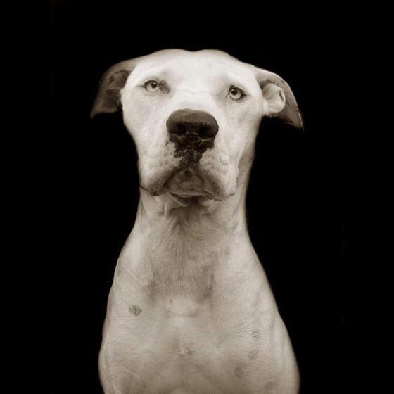 Shelter Dogs ByTraer Scott (8)