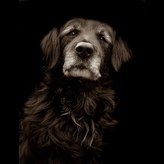 Shelter Dogs ByTraer Scott (9)