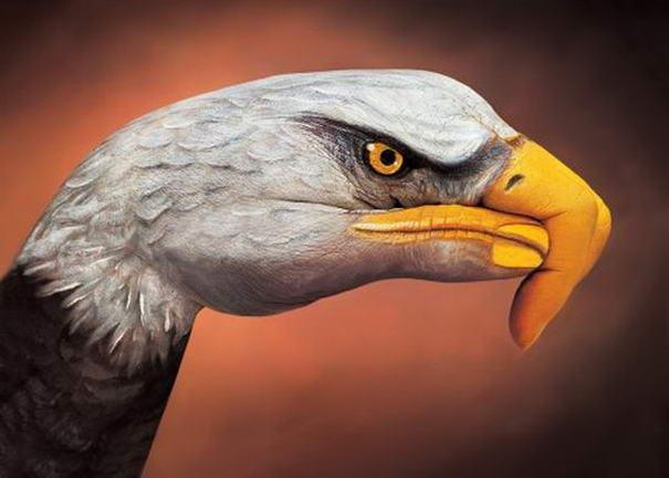 Bald eagle on brown