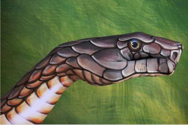 Cobra on green