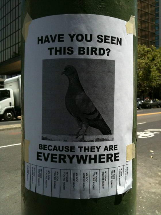 Have You Seen